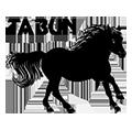 Obozy i rajdy konne – Tabun –  Stadnina Koni Huculskich – Bieszczady
