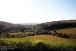 Polana w dolinie potoku Czarnego