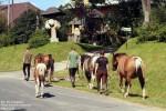 … liczne gospodarstwa agroturystyczne zapraszają wczasowiczów