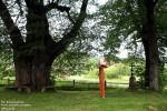 … oraz pomnikowe drzewa…