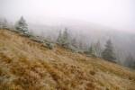 22. Przez cały dzień mgła ...